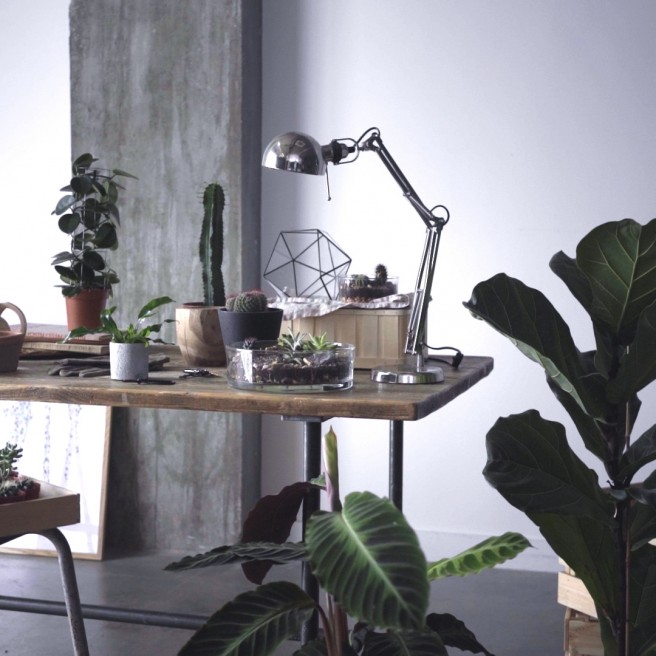 Leafage – Cactus Collection